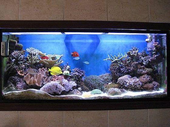 Como decorar un acuario