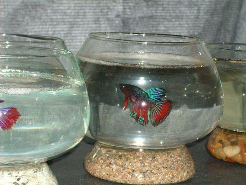 Centros de mesa con peces