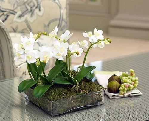 Centros de mesa con plantas naturales