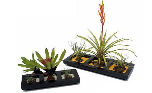 Centros de mesa con plantas