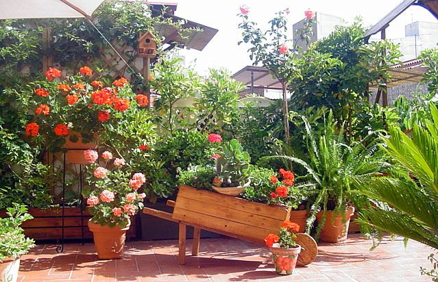 Ideas para decorar el patio for Como decorar mi patio