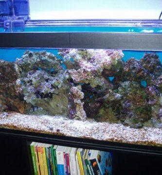 Ideas para decorar un acuario